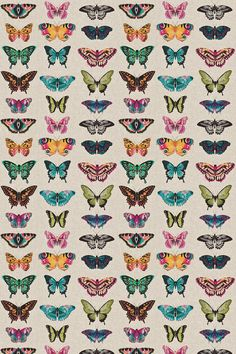 Papilio (120344) - Harlequin Fabrics - Botanical style drawings of butterflies laid out in straight lines, as if in a collector's box.  Butterfly wings in vivid multi colours on a linen base. Shown in the pink, green, blue and orange colourway. Please request sample for true colour and texture.