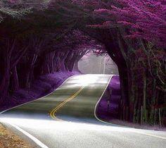 Yes it is purple lol