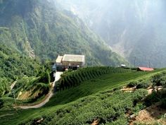 Tea Factory of Taiwan  : These were the factories where the oolong teas are manufactured.
