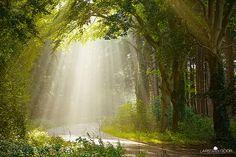 Sunny day in the Netherlands. Photo by Lars van de Goor