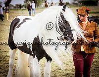 Lancashire Wedding Photographer, Horse Portrait Photographer | In Hand