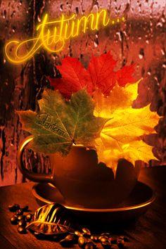 "(via Bill) ""Fall Rain Coffee Time"" -- Not tea this time. Coffee today... <3 More"