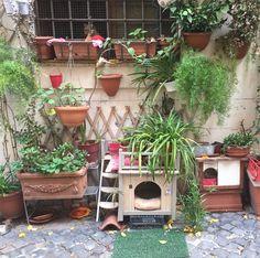Rome, Italy, in Jewish sence. #catparadise #cat