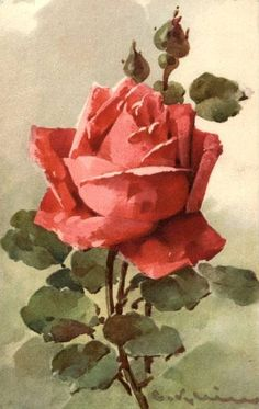 This Pin was discovered by Mer Catherine Klein, Art Vintage, Vintage Flowers, Vintage Images, Floral Illustrations, Botanical Illustration, Watercolor Flowers, Watercolor Paintings, Foto Rose