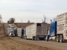 Bull haulers unite THIS IS REALLY AWESOME:)