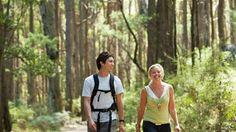 Tallarook State Forest, Daylesford and the Macedon Ranges, Victoria, Australia