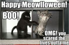 Happy Meowlloween  From C.A.A. ~ Cataddictsanony-mouse