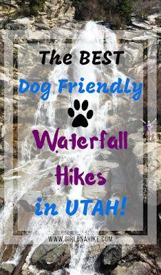 The Best Dog Friendly Waterfalls Hikes in Utah, Hiking in Utah with Dogs, Dog friendly trails in Salt Lake City Dog Travel, Travel Usa, Hiking Dogs, Hiking Trails, Kanab Utah, Utah Adventures, Waterfall Hikes, Utah Hikes, Colorado Hiking