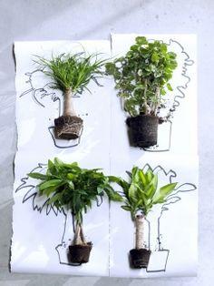 Les Plantes Totems sont les plantes du mois de janvier 2016 | Ma plante mon bonheur