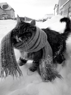 Winter~√