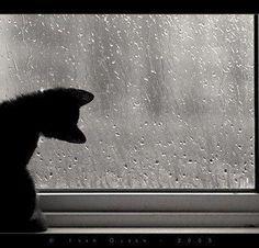 chat noir   :O)