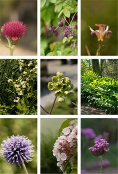Beware, rabbits will eat these plants / Mooi konijnenenvoer - tuinieren.nl