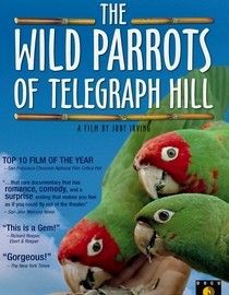 The Wild Parrots of Telegraph Hill. You will be amazed how sad and joyful and surprising this movie is!