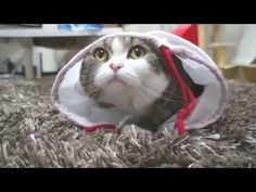 If You Haven't Seen Maru, It's Time You Did! - YouTube