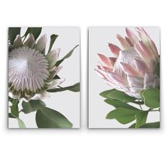 Wall art- King and Queen Protea – Oz Decor and Protea Art, Protea Flower, Floral Drawing, Floral Watercolor, Art Floral, The Psychedelic Furs, Desert Flowers, Sketch Inspiration, Flower Art