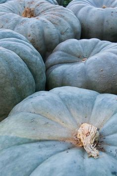 Love these blue variety of a pumpkin!
