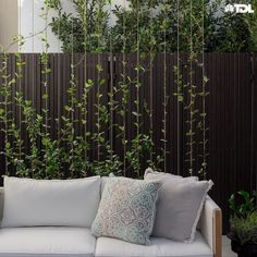 Space Stars Growing vertically on a wire trellis, the Star Jasmine aids to the Illusion of depth in the spall space. Perfectly paired with a Soft white outdoor lounge, creating an ideal lounging area. Wire Trellis, Garden Trellis, Garden Pool, Porch Trellis, Side Garden, Perth, Landscape Design, Garden Design, Outdoor Living