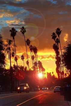 Palm Trees sunset on the road