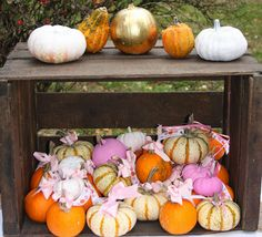 Party favors-baby pumpkins with a thank you message {1st birthday party, pumpkin patch, October baby}