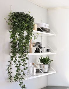 all-white ekby gallo shelving filled with lots of greenery plus neutral accents