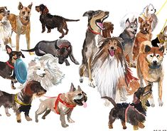 """Check out new work on my @Behance portfolio: """"dogs watercolor series"""" http://be.net/gallery/63270821/dogs-watercolor-series"""