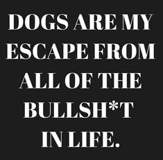 Without a doubt!! #funnydogquotes