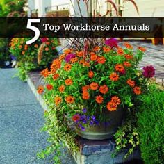 5 Top Five Workhorse Annuals