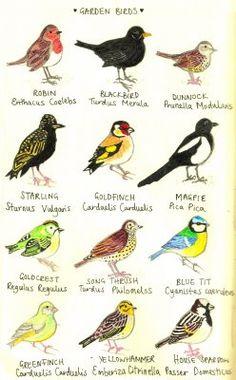 birds by kate blake