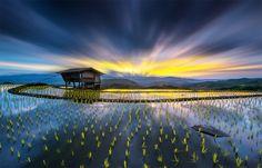 Rice Fields, Thailand By Sarawut Intarob