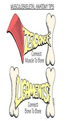 Nursing School: Medical Surgical Nursing Mnemonics Tendons and ligaments Nursing Assessment, Nursing Mnemonics, Pharmacology Mnemonics, Nursing School Notes, Nursing Schools, Medical Surgical Nursing, Surgical Tech, Shiatsu, Medical Anatomy