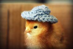 chicks-in-hats-07.jpg