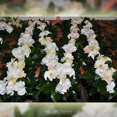 Initialele mirilor din flori, aranjament disponibil pe 123flori.ro Spice, Sugar, Herbs