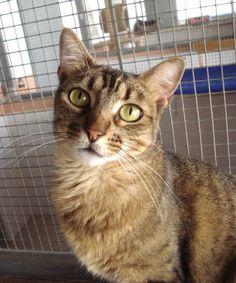 Helfende Hände e.V. - Katze Bita (EKH ca. 3 Jahre) sucht ein Zuhause…