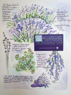 Maine's Glendarragh Lavender Farm by Sketchbook Wandering