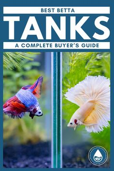 It may seem like a daunting task, but picking out the best betta tank doesn't have to be a tough decision. Betta fish are a great option for beginners, but do have a few specific needs. It's best to become familiar with their requirements before you settle on your ideal betta tank. Betta Fish Tattoo, Betta Fish Care, Aquarium Kit, Aquarium Design, Colorful Fish, Tropical Fish, Tank Stand, Betta Tank, Freshwater Aquarium Fish