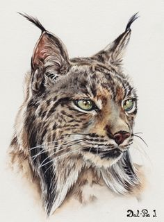 Watercolor by Isabelle Dal-Pos Art Watercolor, Watercolor Animals, Pencil Art Drawings, Cat Drawing, Lynx, Animal Sketches, Animal Drawings, Dark Art Tattoo, Color Tattoo