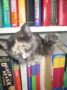 Kissa, defending her books!!