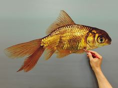 Hyper realism painting by artist Young-Sung Kim Hyper Realistic Paintings, A Level Art, Photorealism, Realism Art, Fish Art, Insta Art, Art Sketches, New Art, Art Projects