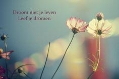 droom niet je leven maar leef je dromen