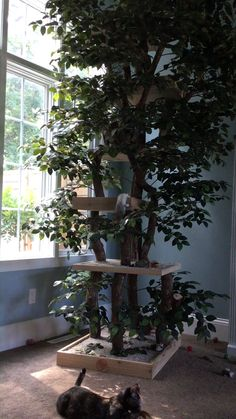 This nearly 11 foot tall custom cat Tree is the purrfect playground for indoor c.This nearly 11 foot tall custom cat Tree is the purrfect playground for indoor cats! Cat Tree House, Cat House Diy, Tree Houses, Cool Cat Trees, Diy Cat Tree, Best Cat Tree, Outdoor Cat Tree, Outdoor Cat Houses, Outdoor Cat Enclosure