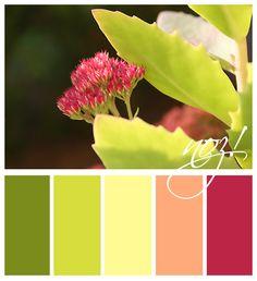 color palette - sedum