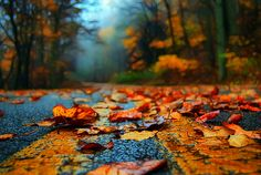 Autumn Leaves, Blue Ridge Parkway, Virginia  photo by LynchburgVirginia