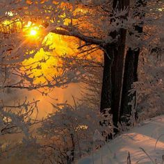 A lone winter's dusk when golden rays collide with frosty crystals, an inspiration bringing notice even to the dormant heart.  Take note, breathe in the cold and exhale twilight.