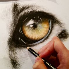 """Working on a close up of a Snow leopards eye. 12x16"""" Polychromos colour pencils…"""