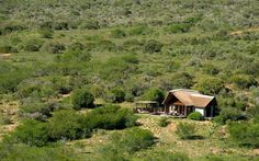 Kwandwe in the center of South Africa's malaria-free area near Grahamstown. Situated on 23 100 hectares of the vast African wilderness. The reserve is a member of the exclusive Relais & Chateaux portfolio. River Lodge, Private Games, Thatched Roof, National Art, Game Reserve, Lodges, Wilderness, South Africa, Safari