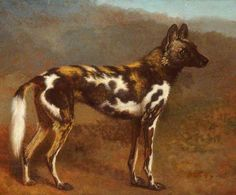 Cape Hunting Dog, by Jacques Laurent Agasse (Swiss, 1767-1849)