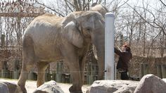 Dalton McGuinty: Move Toronto zoo elephants to PAWS california zoo.