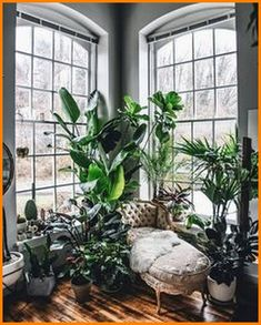 home decor with plants houseplants / home decor with plants . home decor with plants living rooms . home decor with jungle apartment therapy Home Decor With Plants Houseplants . Home Decor With Plants Plantas Indoor, Plant Aesthetic, Decoration Plante, House Plants Decor, Indoor Plant Decor, Big Indoor Plants, Large Plants, Interior Plants, Home Interior