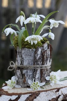 Hübsche Frühblüher-Deko Despite snow, decorative snowdrops, winter aconites and other early bloomers open their flowers. But why are these plants. Arte Floral, Deco Floral, Window Box Plants, Window Boxes, Blooming Flowers, Spring Flowers, Garden Art, Garden Design, Pot Jardin