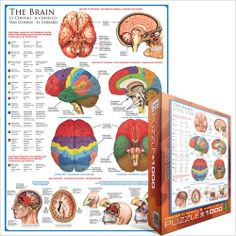 The Brain, Jigsaw Puzzle at Eurographics